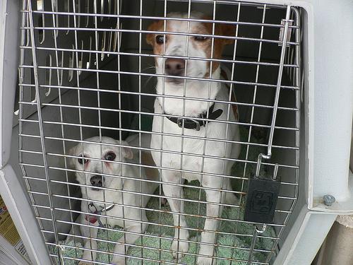 SPCA Dogs
