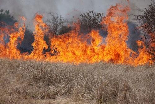 Cheatgrass on fire